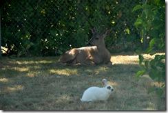 Marsh and buck1